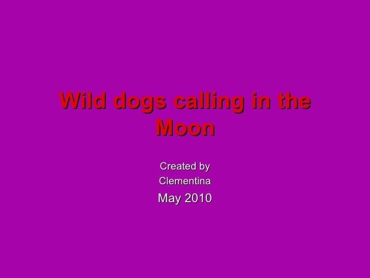 Wild dogs calling in the Moon Created by Clementina May 2010