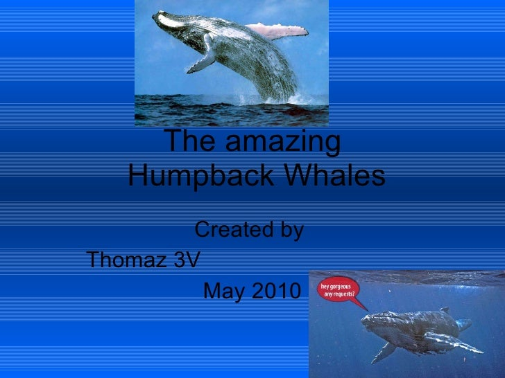 The amazing  Humpback Whales Created by  Thomaz 3V  May 2010