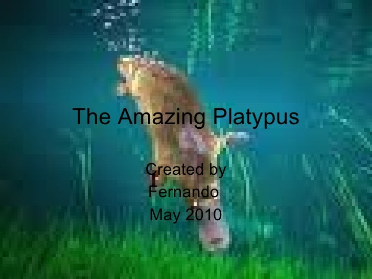 The Amazing Platypus Created by Fernando  May 2010