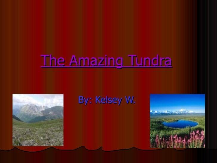 The Amazing Tundra Willmes