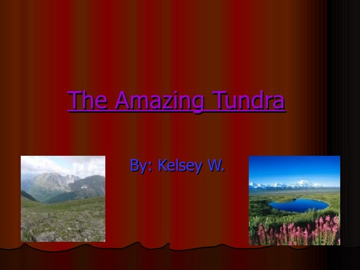 The Amazing Tundra   By: Kelsey W.