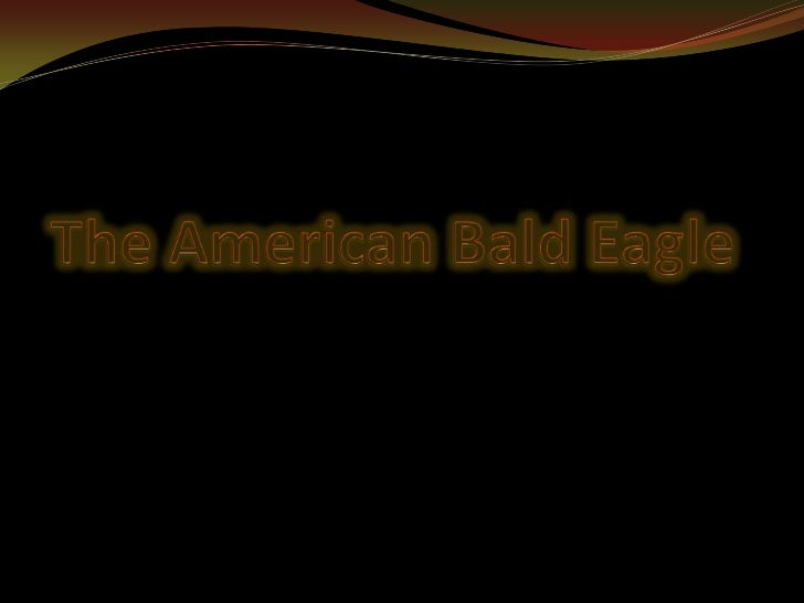 The american bald_eagle