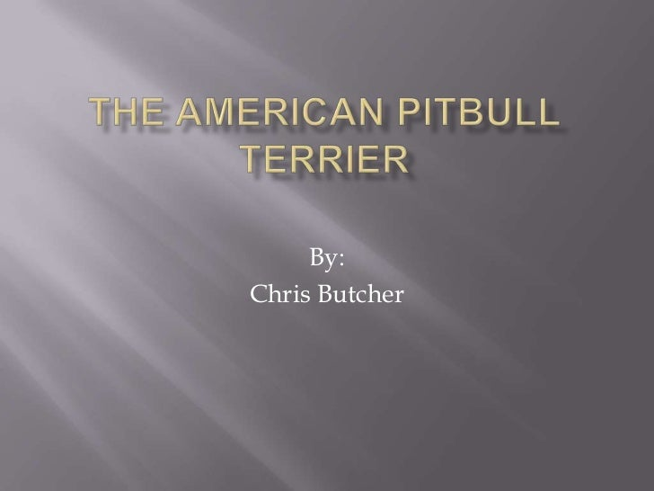 The americanpitbull terrier<br />By: <br />Chris Butcher<br />
