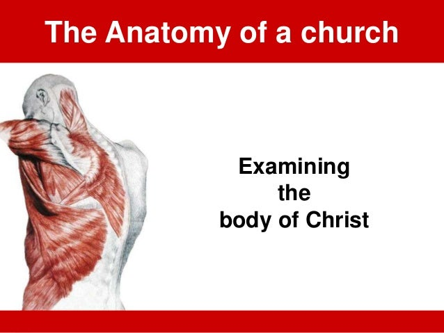 The Anatomy of a church Examining the body of Christ