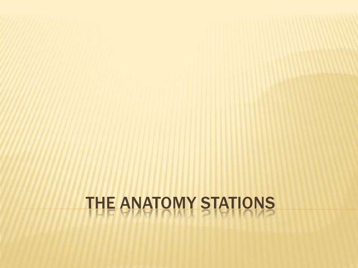 THE ANATOMY STATIONS