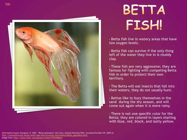 Free Download Can Betta Fish Eat Crackers Filemed