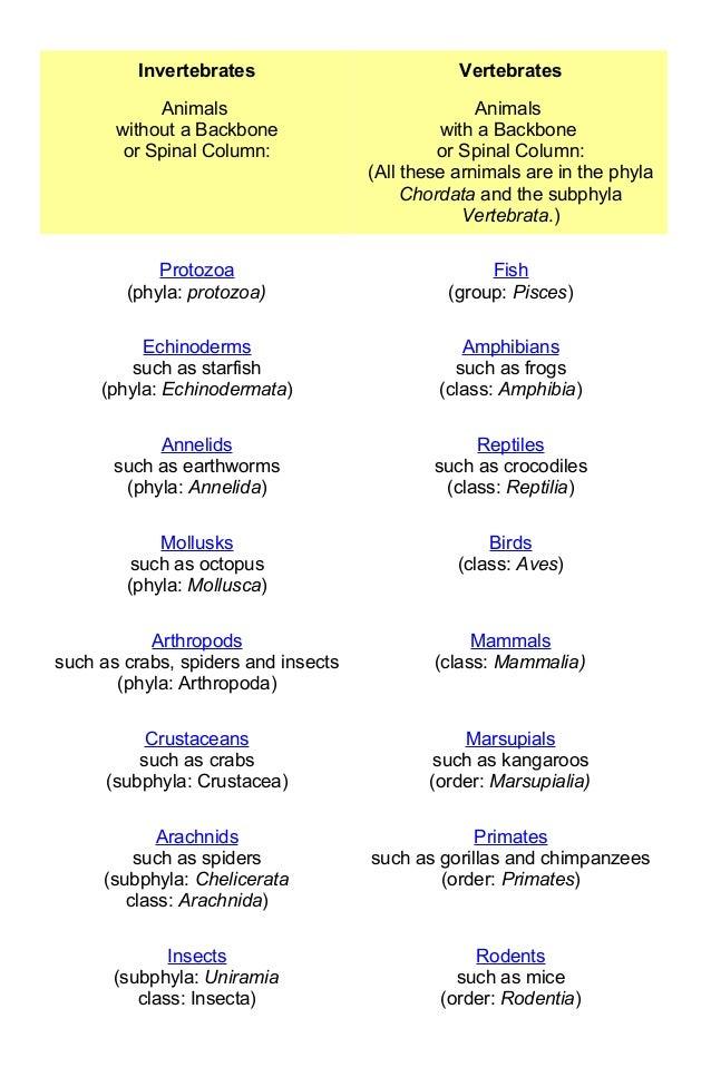 Phylum Chordata Animals List Animals Without Backbo...