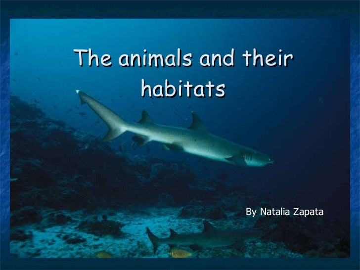 The animals and their habitats By Natalia Zapata