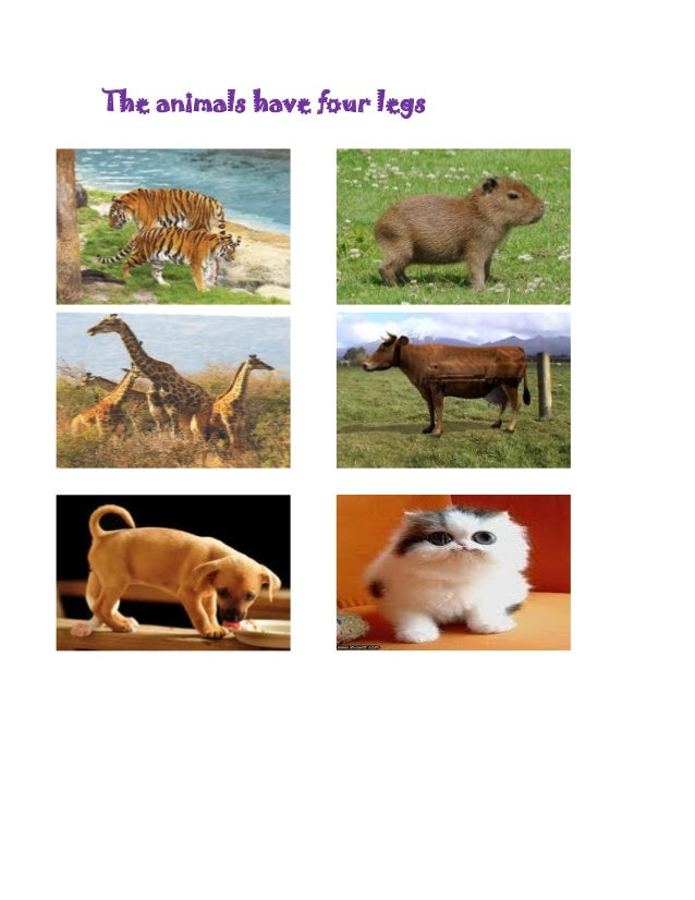 The animals have four legs
