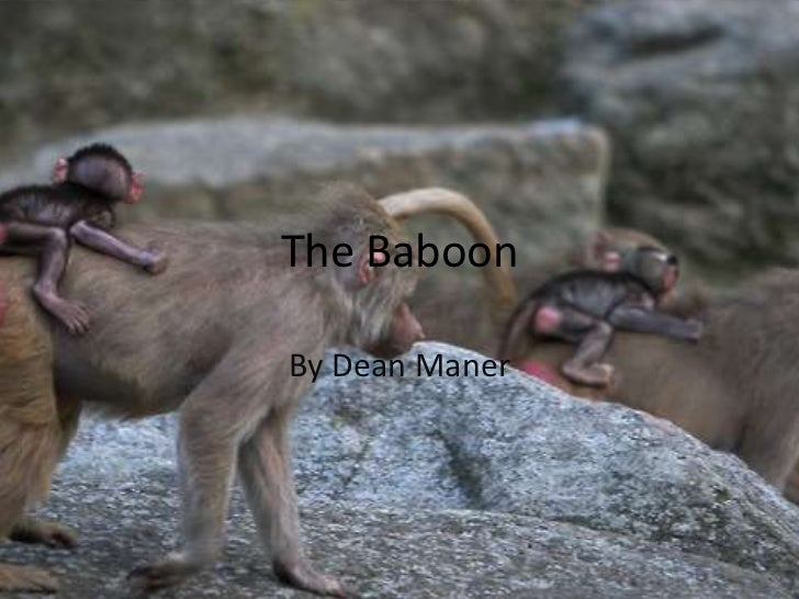 The Baboon<br />By Dean Maner<br />