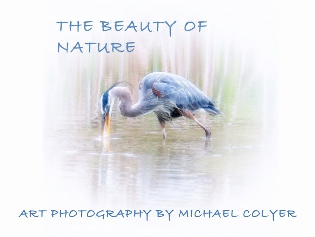 THE BEAUTY OF    NATUREART PHOTOGRAPHY BY MICHAEL COLYER
