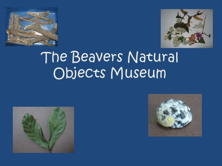 The Beavers Natural Objects Museum<br />