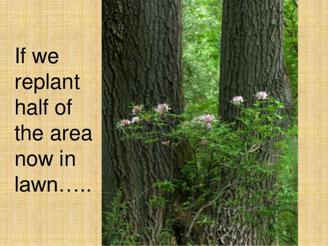 If we replant half of the area now in lawn…..