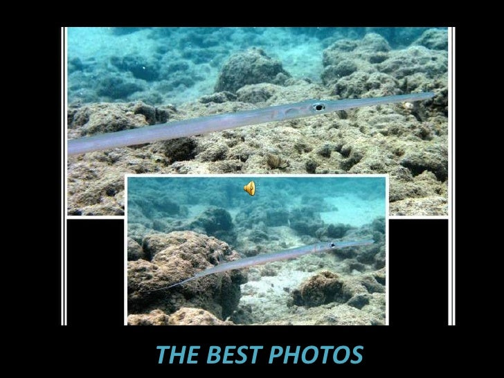 The Best Photos