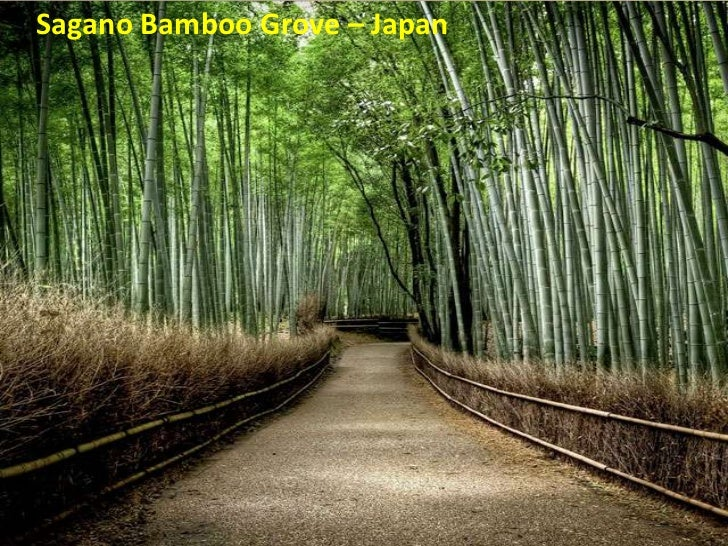 Sagano Bamboo Grove – Japan