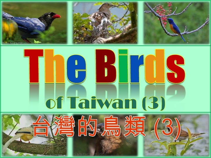 TheBirds<br />of Taiwan (3) <br />台灣的鳥類 (3)<br />
