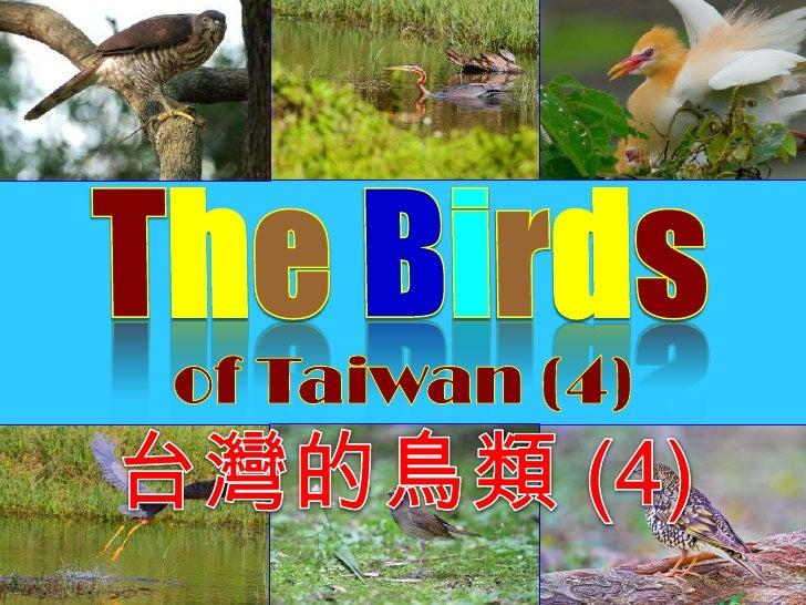 TheBirds<br />of Taiwan (4)<br />台灣的鳥類 (4)<br />