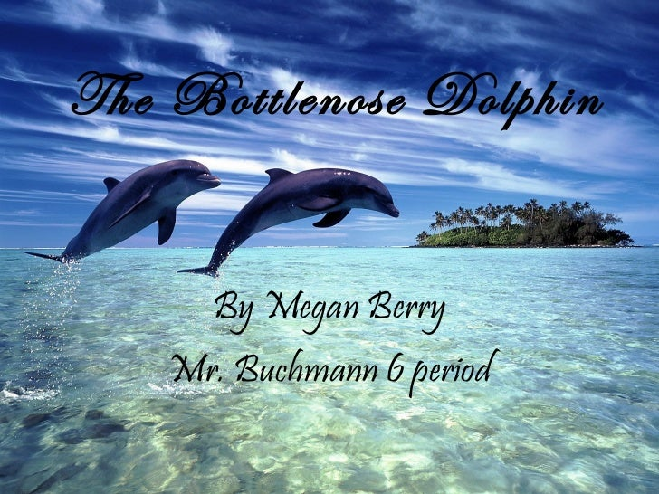 The Bottlenose Dolphin By Megan Berry Mr. Buchmann 6 period