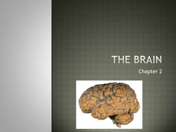 The Brain<br />Chapter 2<br />
