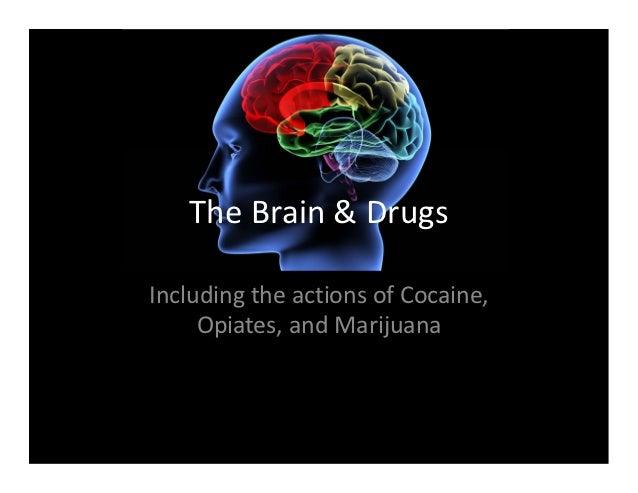 TheBrain&DrugsIncludingtheactionsofCocaine,     Opiates,andMarijuana