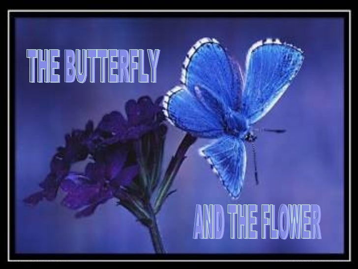 The Butterfly   The Flower