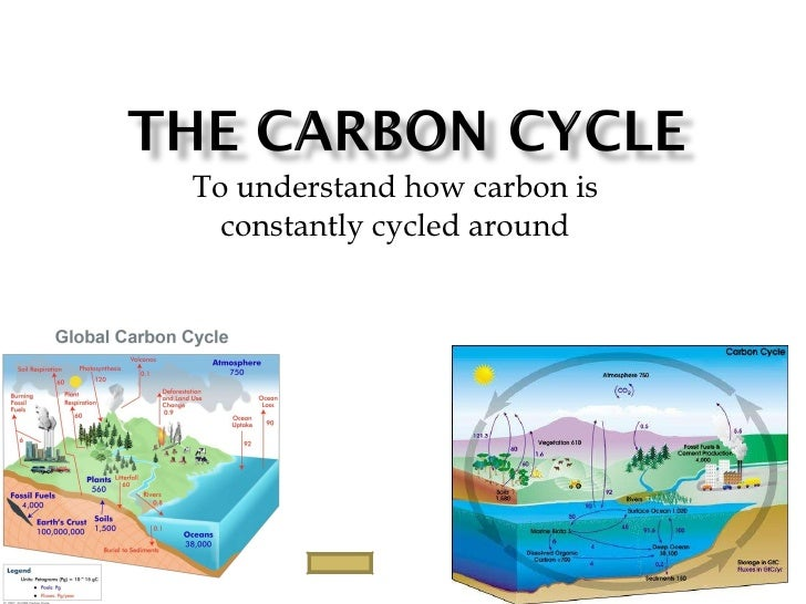 To understand how carbon is constantly cycled around