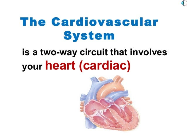 The Cardiovascular System is a two-way circuit that involves your heart (cardiac)