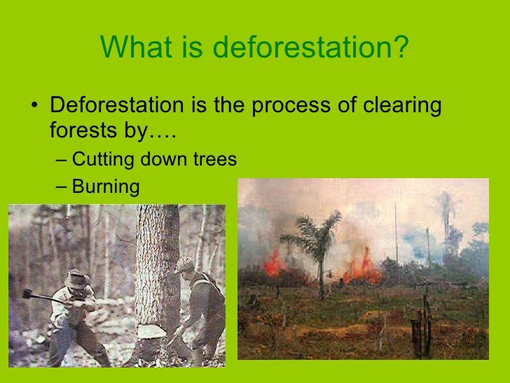 the deforestation of the amazon a case study in understanding ecosystems and their value Study on understanding the causes of biodiversity case studies on marine ecosystems and biodiversity loss 127 72 case study 3b: the amazon forest ecosystem 177.
