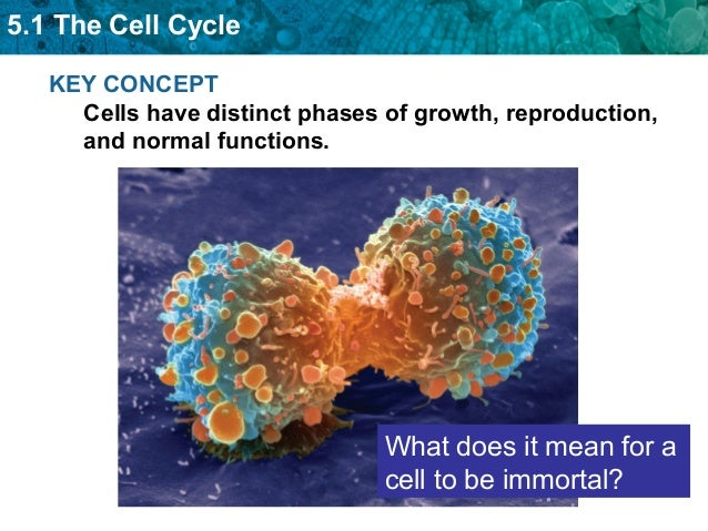 What does asexual reproduction mean picture 36
