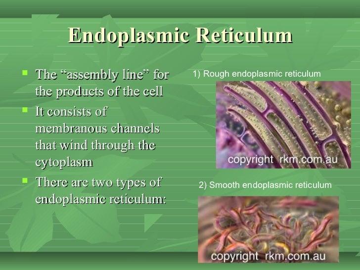 cytoplasm analogy