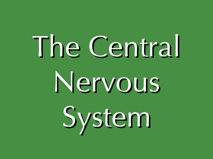 The central nervous system ii