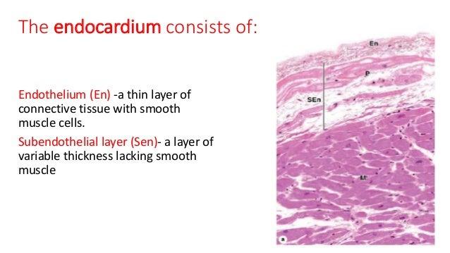 cardiovascular physiology essay questions