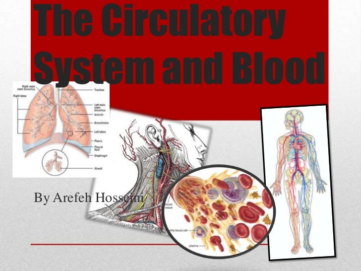 The Circulatory System and Blood<br />By Arefeh Hosseini<br />