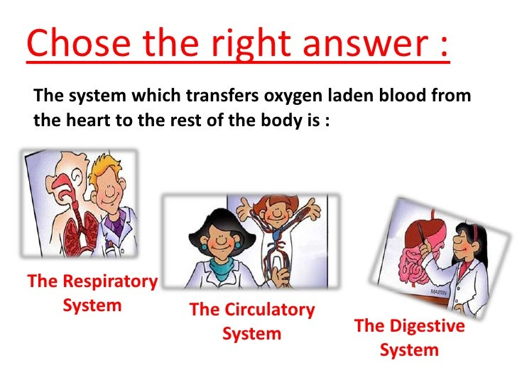 The circulatory system worksheet in english
