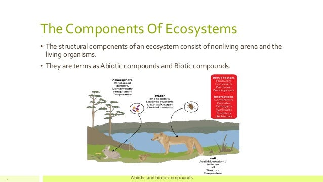 biotic component paper Students create a marine ecosystem that includes two fictitious organisms they describe the adaptive, trophic, and symbiotic relationships between the biotic and abiotic components of the ecosystem.