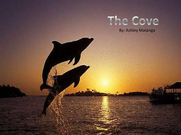 The Cove <br />The Cove<br />The Cove<br />By: Ashley Matanga <br />By: Ashley Matanga<br />By: Ashley Matanga <br />