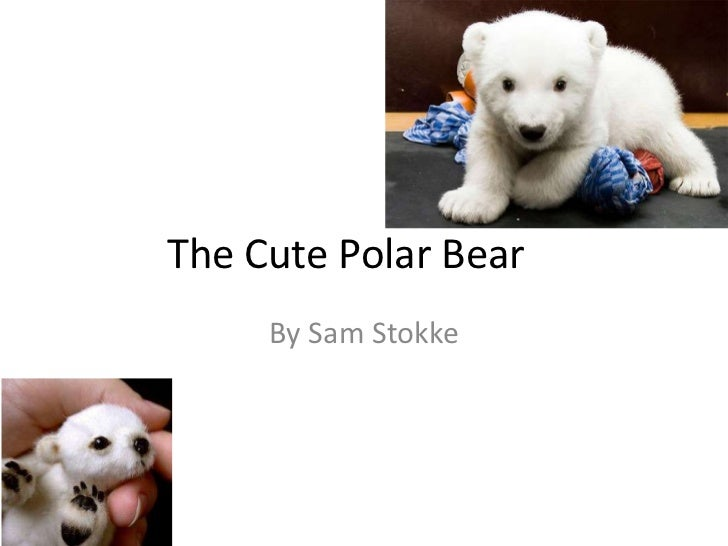 The Cute Polar Bear     By Sam Stokke