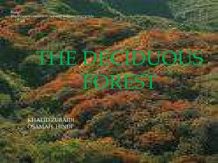 Image: http://sciencecastle.com/sc/app/webroot/img/articles/121.jpg<br />THE DECIDUOUS FOREST<br />KHALID ZUBAIDI<br />OS...
