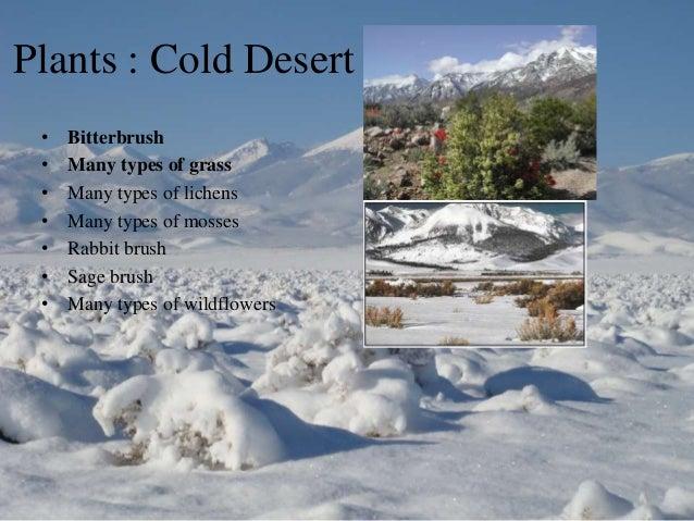Cold Desert Biome Plants  Hunker