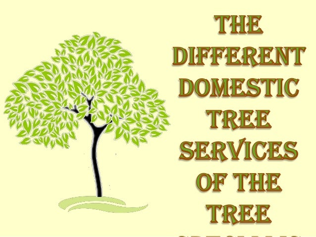 The Different Domestic Tree Services of the Tree Specialist Firms