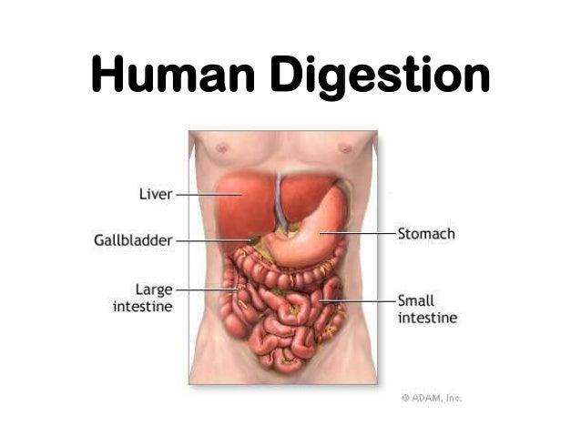 The digestivesystem