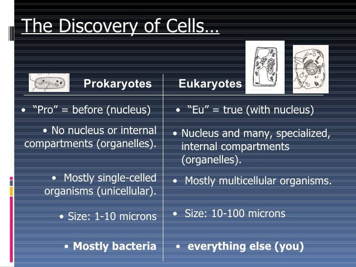 the discovery and news about the cell nucleus