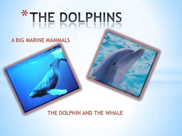 *A BIG MARINE MAMMALS            THE DOLPHIN AND THE WHALE