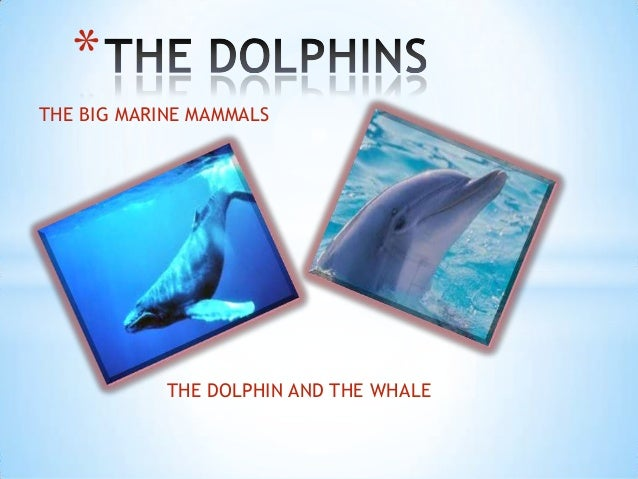 *THE BIG MARINE MAMMALS            THE DOLPHIN AND THE WHALE