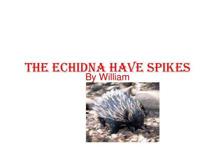 The echidna have spikes<br />By William<br />