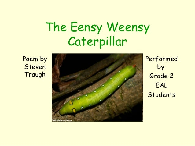 The Eensy Weensy Caterpillar Poem by Steven Traugh Performed by Grade 2 EAL Students
