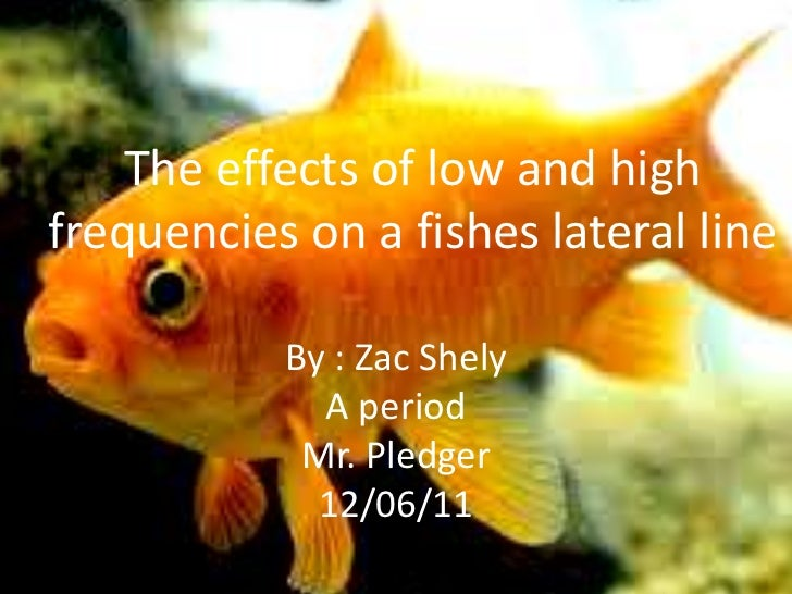 The effects of low and highfrequencies on a fishes lateral line           By : Zac Shely             A period            M...