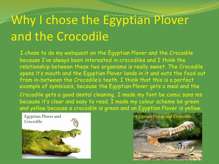 symbiotic relationship between the nile crocodile and egyptian plover