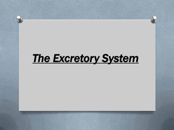 The Excretory System<br />