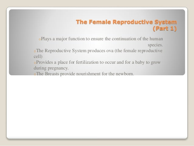 The Female Reproductive System (Part 1) oPlays a major function to ensure the continuation of the human species. oThe Repr...